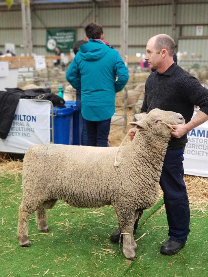 First Place, Sheepvention 2018